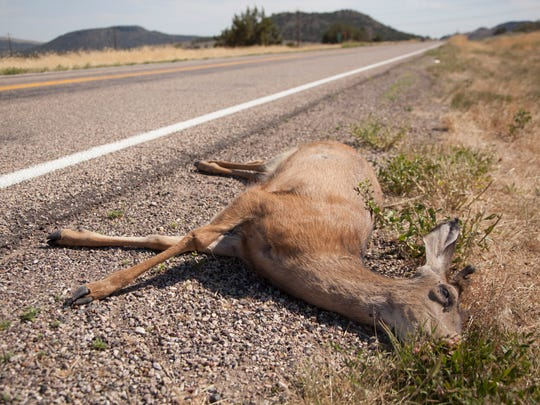 More than 17,000 Montana motorists filed insurance claims after striking an animal on a roadway last year, making Montana second worst in the nation for animal strikes.