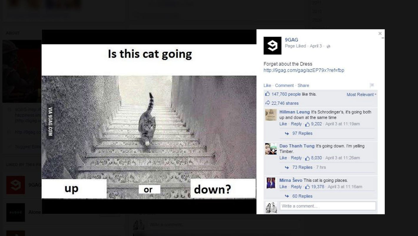 The Internet needs to know: Is this cat going up or down ...
