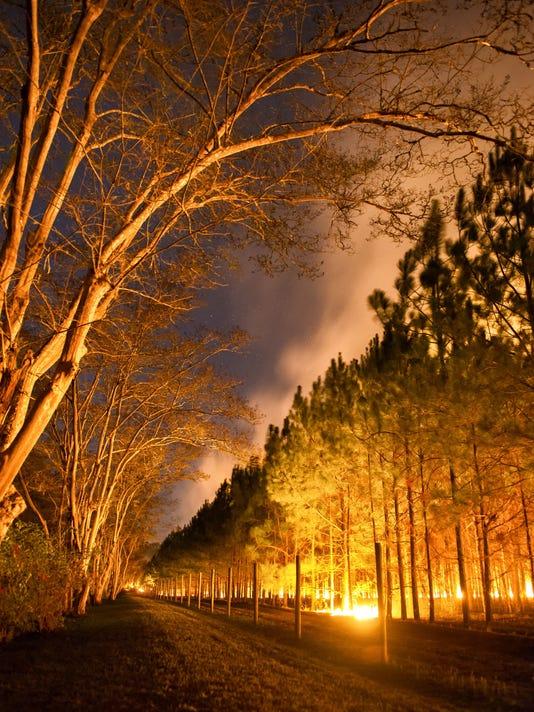 Night Burn by Elmore Demott.jpg