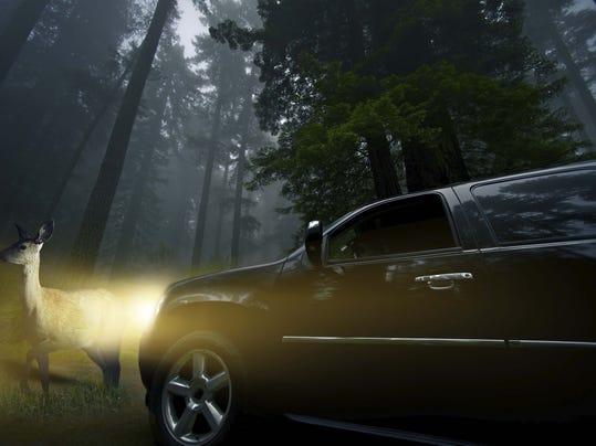 deer_headlights.jpg