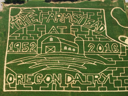 The cornmaze at Oregon Dairy Farm is something of a legend to local maze-seekers.