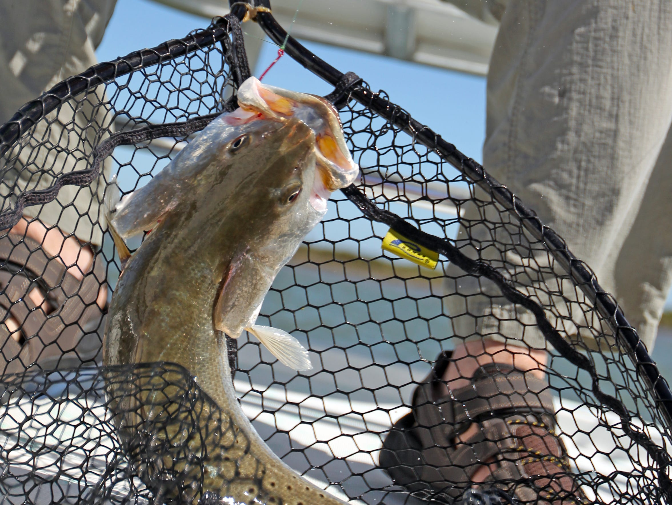 Speckled trout is the most popular game fish among Texas coastal anglers. Ask prospective guides which species he plans to target and by what means and methods.