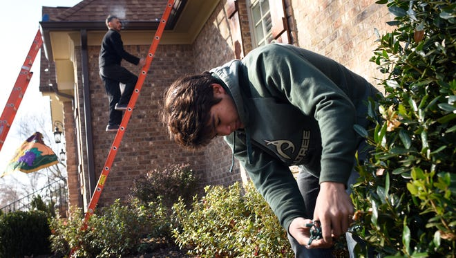 Heath Yates with Lumenate Brentwood works on lighting the bushes outside a home on November 26, 2016. Thousands of LED lights will brighten up the property in time for Christmas.