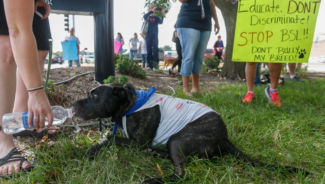 """Dani Newlon gives her pit bull Tupper a drink of water while participating in the """"Don't Bully My Bully"""" rally in front of city hall on Friday, August 25, 2017."""