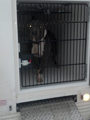 The first dog loaded into Humane Officer Ashlee Bishop's truck.