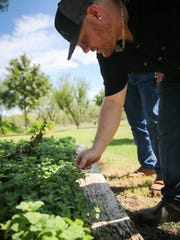 Angry Cactus Chef Tim Condon, who likes to shop local and cook with the seasons, is checking out the herbs at KST Ranch and Organics.