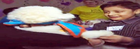635596819090724962 Dog help