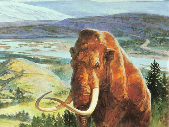 An artist's painting depicting a woolly mammoth. Illustration courtesy of the Wisconsin Department of Natural Resources.