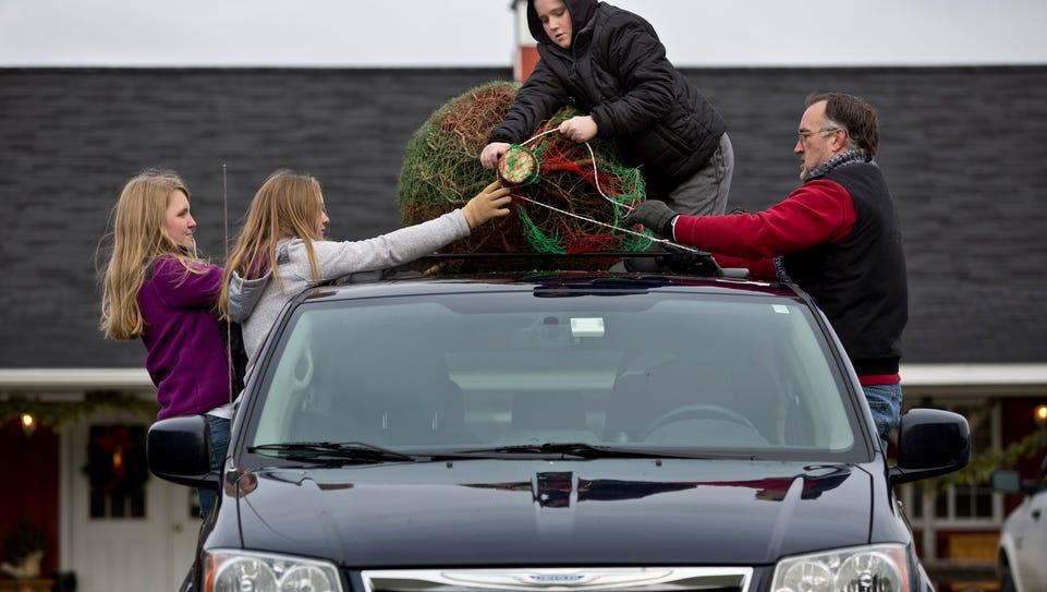 Greg Ball, of Lindenhurst, Ill., fastens a tree to