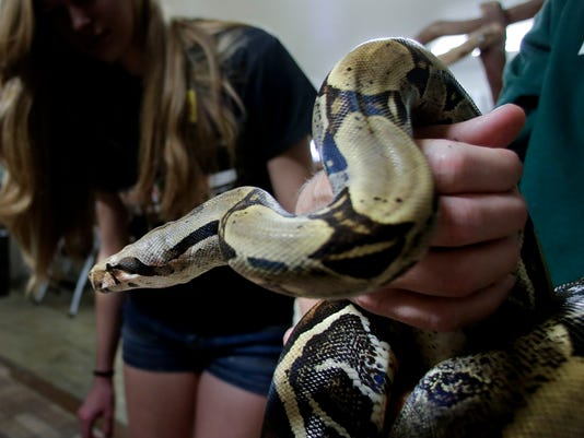 635956446839837928-red-tailed-boa-constrictor.jpg