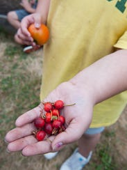 Kids are more likely to eat vegetables and fruits if