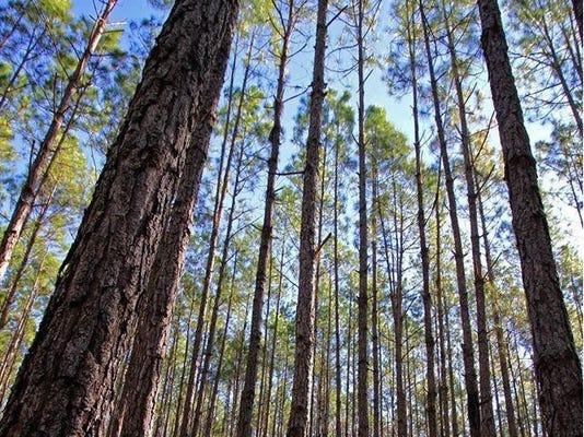 trees cropped.jpg