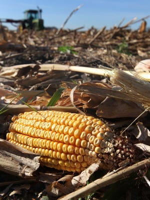 Post-corn harvest debris, used to make biofuels, is piled high near High Amana in October 2010.