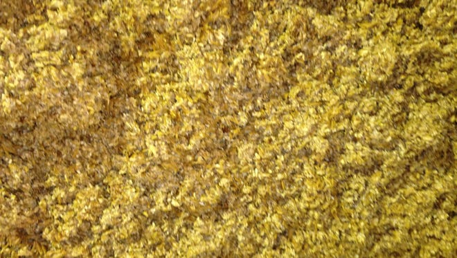 This spent grain is the waste created Monday morning during Rohrbach's brewing process.