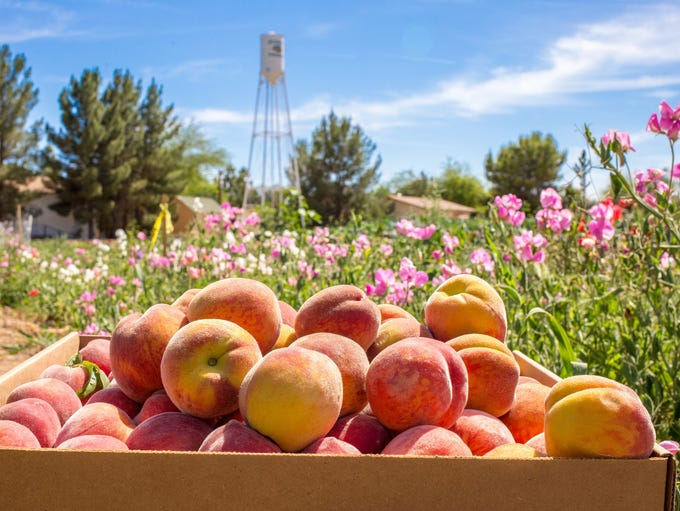 Arizona: Peach Festival