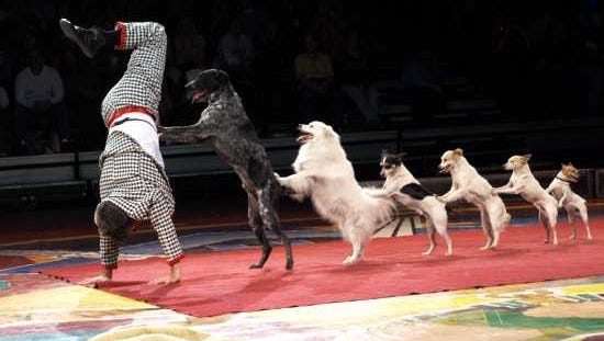 A slapstick comedy act with canines, Johnny Peers and the Muttville Comix!,is coming to the Coughlin-Saunders Performing Arts Center in downtown AlexandriaSaturday.