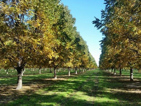 636683063218088177-montz-orchard.jpg