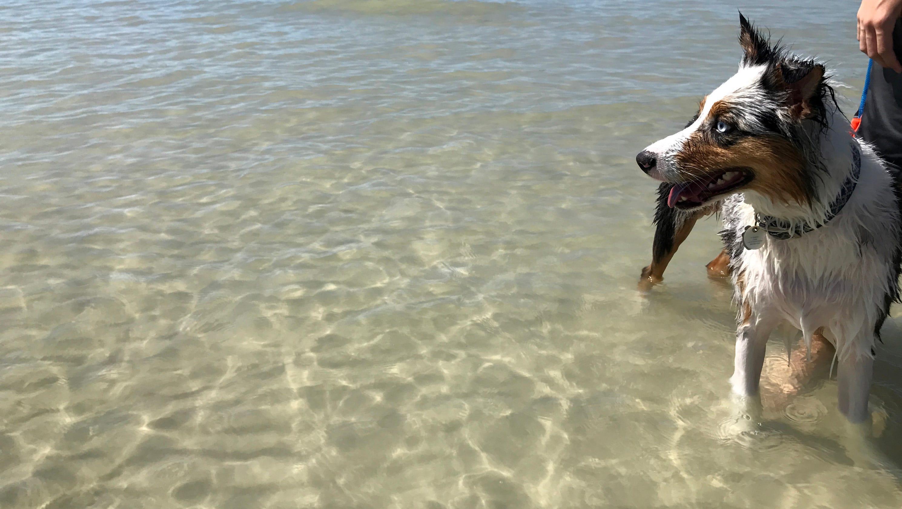 Dog Beaches Southwest Florida