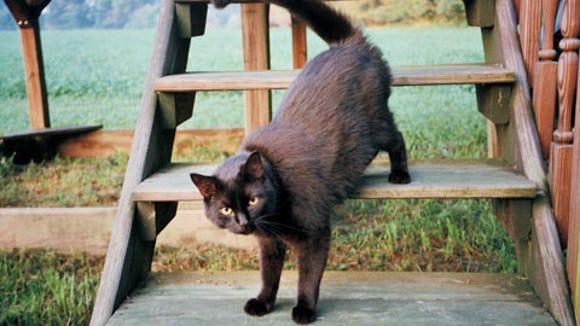 blackcats-lehman
