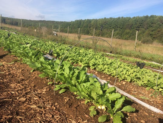 Project Grows's farm in Verona (Oct. 14, 2016).