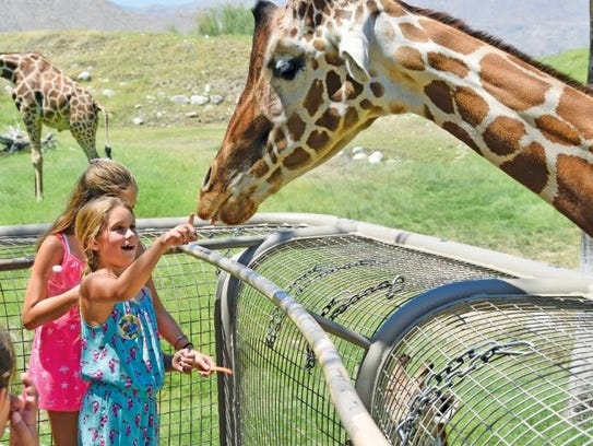 Visitors to The Living Desert get a chance to feed the giraffes.