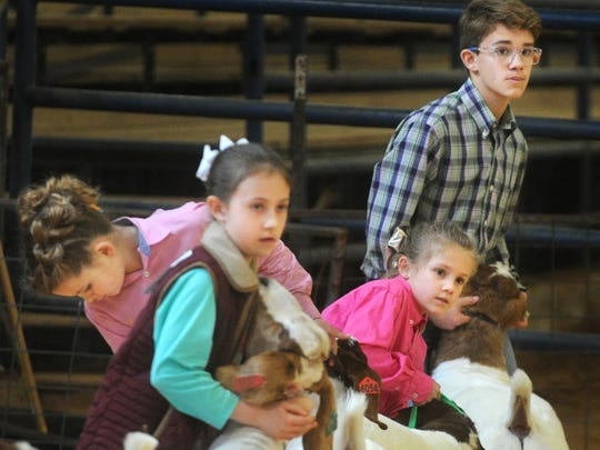 Youngsters show their goats during  competition at the Taylor County Livestock Show on Thursday, Jan. 19, 2017. Friday's events include the swine competition.