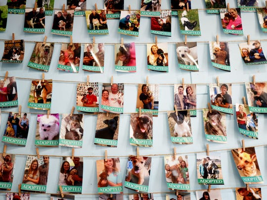 The wall of adoptions at the Humane Society of Northwest Louisiana.
