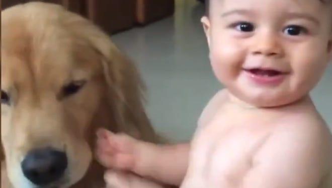 A snapshot of a Golden Retriever licking a baby's face.