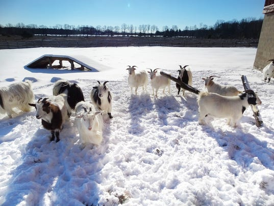 Al johnsons goats stay in door county but products are in stores als31 winter goats eventshaper