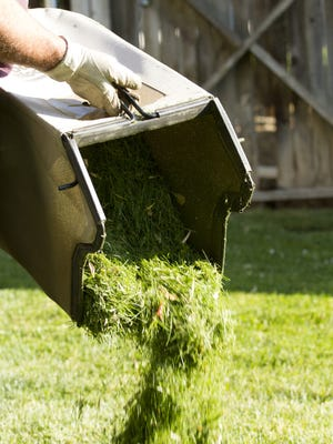 Grass clippings