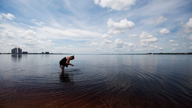 Mary Rodriguez, a resident of Fort Myers  searches for the shells in Caloosahatchee river on the beach of North Shore Park in North Fort Myers on Friday.