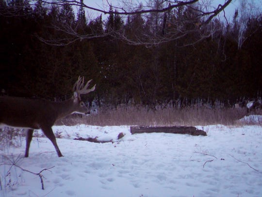 This trail cam photo was taken 10 seconds before Kyle