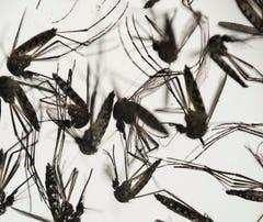 Gov. Scott proposes Florida spend $4 million to combat Zika virus