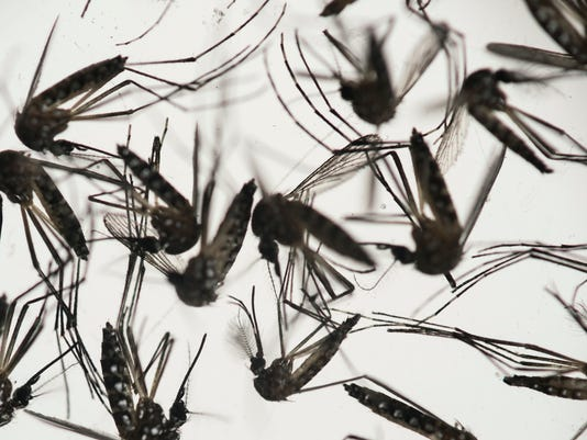 #file mosquitoes Stock Photo