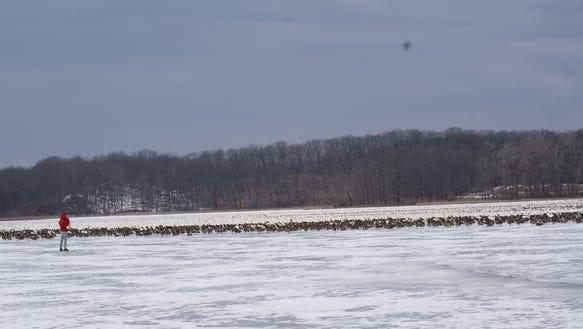 geese DSC00282