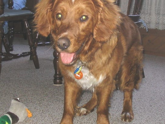Riley, a duck tolling retriever, was known as the PR