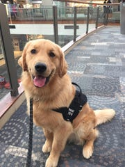 Sampson is Kaeylnn Partlow's service dog. A golden retriever, he can stand 3 to 5 feet from Partlow and serve as a buffer if a crowd is too large. He also provides deep pressure therapy when needed.