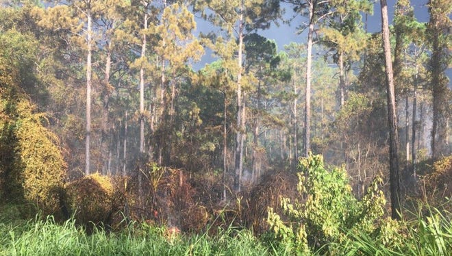 Florida Forest Service and Indian River County crews responded to a 3-acre wildfire off Interstate 95 in Fellsmere on Friday, July 6, 2018.