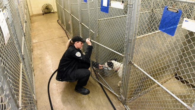 Deputy dog warden Brittany Calihan fills a dog's water bucket at the Muskingum County Dog Shelter on Monday.