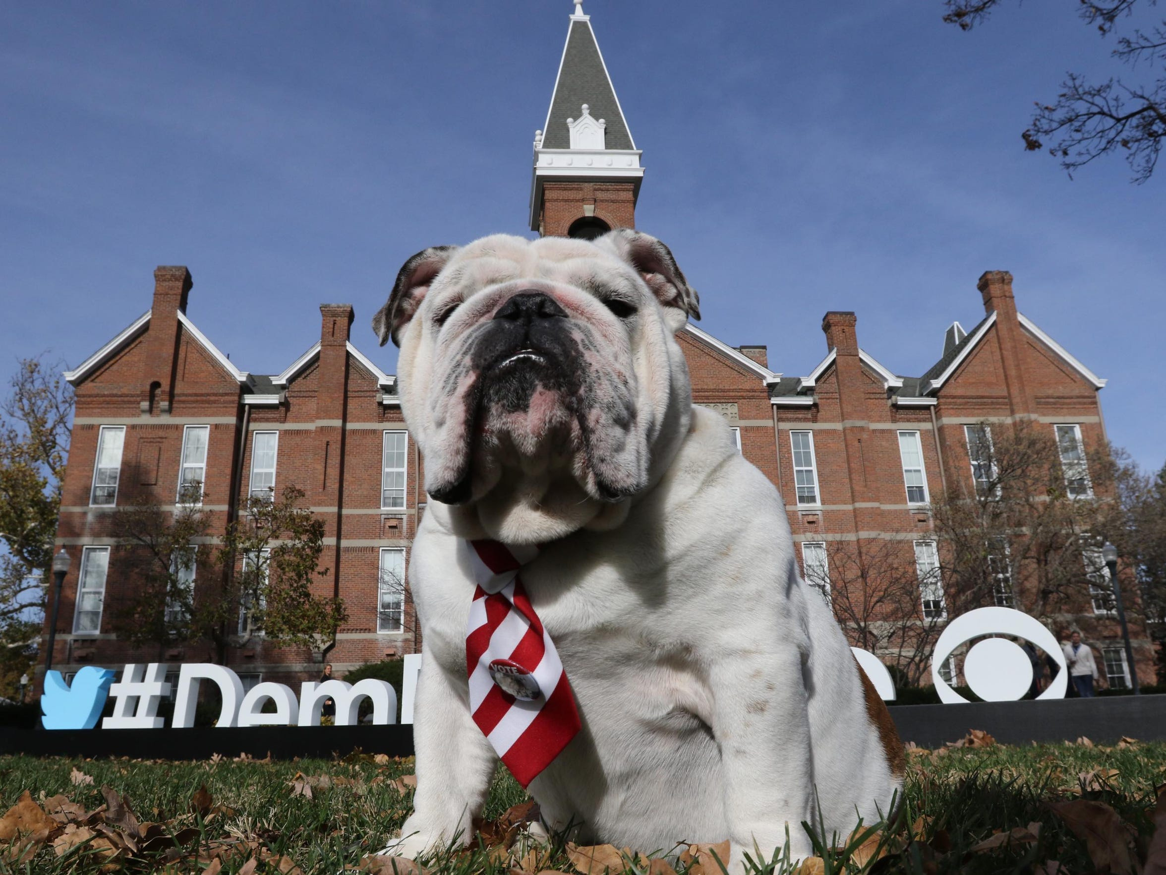 A bulldog, the Drake University mascot, sits in front of Old Main on Saturday, Nov. 14, 2015, ahead of the Democratic Debate.