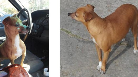 Lulu went missing after her home was burglarized.