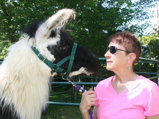 Pamella Watson nuzzles Harley, a therapy llama who charmed attendees Saturday at the Sheep to Shawl Family Fun Festival at the Willamette Heritage Center at Mission Mill.