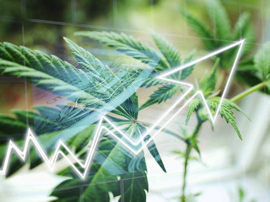 Line chart trending upward with a cannabis plant in the background