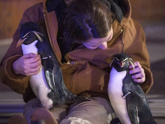 636504881403313981-Christmas-at-the-Zoo-JRW08.JPG
