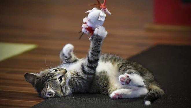 Here's one of the cutest kittens in St. Cloud, Minn. Show us the cutest cat in Tallahassee.