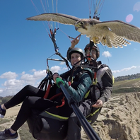 Parahawking: Get bird's-eye view of San Diego
