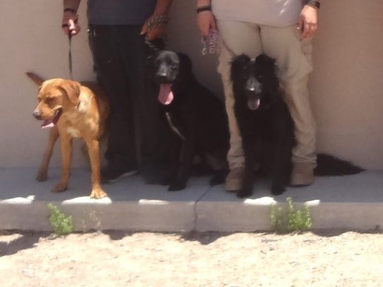 The Animal Service Center of the Mesilla Valley is