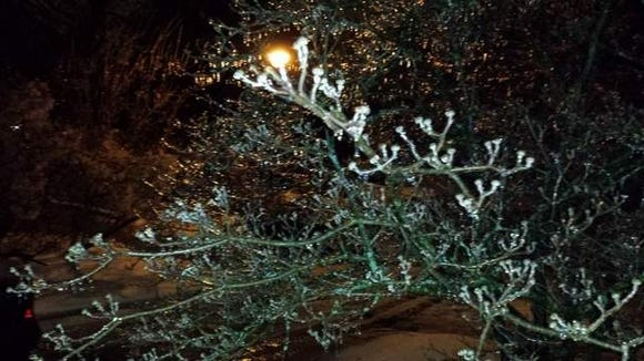 Ice on the trees on Wednesday morning, February 5, 2014.