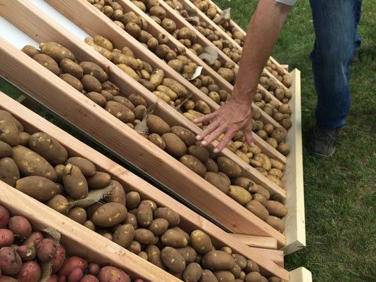 spj 0723 PotatoDay03