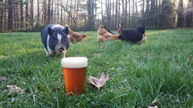 Sanctuary Brewing has opened in Hendersonville as a taproom supporting animal welfare and shelters. It will begin brewing once federal permitting is received.